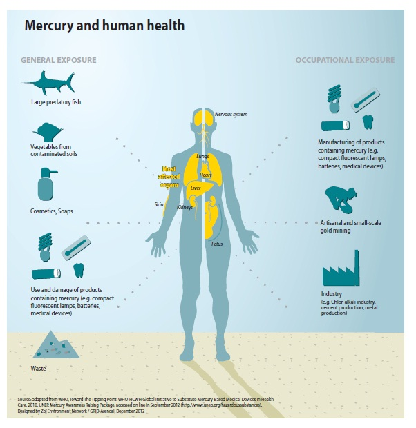 "Mercury and Human Health Image courtesy :Publication of UNEP ""Mercury Time to Act"""