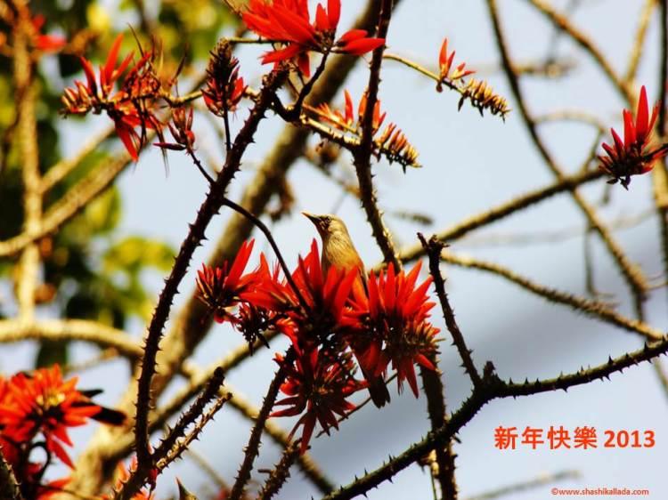 Lunar New Year 2013- Photo by Shashi Kallada